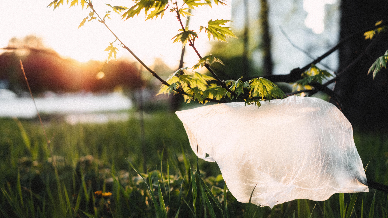 Zero Plásticos na Natureza The Minimal Magazine